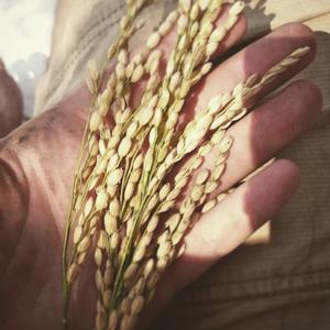 Priceless_farms